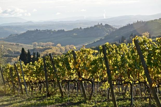 Toscane_Vignes